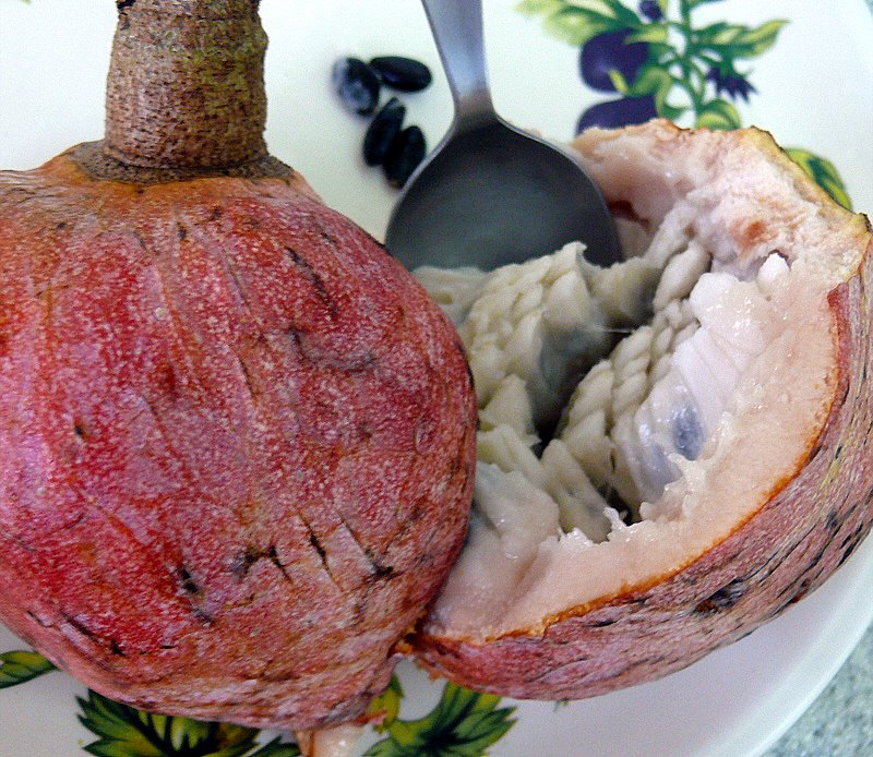jamaican custard apple -#main