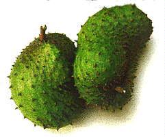 Jamaican Sweetsop Jamaican Fruit and Vegetables